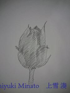 マルス ルモグラフ アクェレル 水彩鉛筆で描いた花