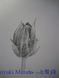 マルス ルモグラフ アクェレル 水彩鉛筆を使って描いた花(仕上がり)