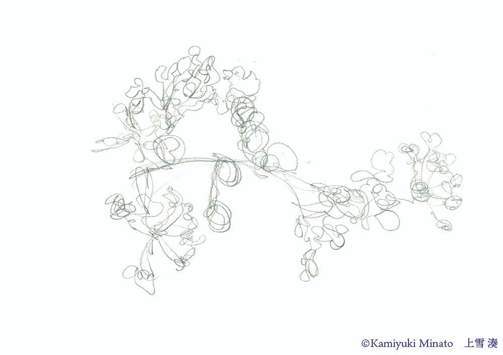 百日紅の花 ジェスチャードローイング